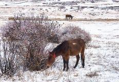 Saison stupéfiante d'hiver à la réserve naturelle de Yading dans Sichuan, la Chine images libres de droits