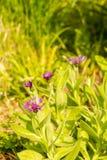 Saisonblütenpflanzen Lizenzfreie Stockfotografie