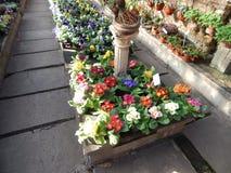 Saisonblumen Stockfotos
