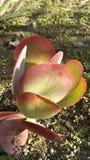 Saisonfarbänderung auf saftigem Garten Stockbild