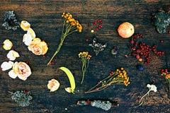 Saisonfrühlingszusammensetzung der Blume, der Beere, des Apfels und des mose Produktstilllebenbild als gelegte flache oder Draufs Stockbilder