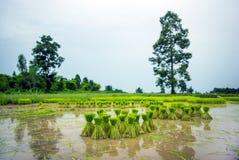 Saisonlandwirtschaft in der Landschaft Lizenzfreie Stockbilder