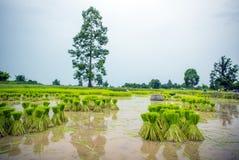 Saisonlandwirtschaft in der Landschaft Stockfotos
