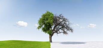 saisons changeantes Photo libre de droits