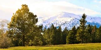 4 saisons en une photo image stock