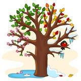 Saisons sur un arbre Images stock