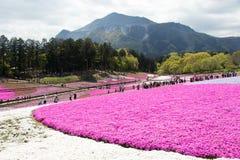 SAITAMA JAPONIA, APR 28 -, 2017: Różowy mech przy Hitsujiyama parkiem Obrazy Stock