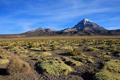 Sajama εθνικό πάρκο, Βολιβία Στοκ Φωτογραφία