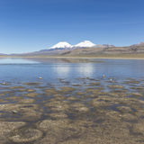 The Sajama National Park in Ranger of Bolivia- Royalty Free Stock Images