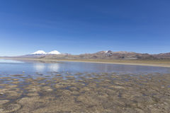 The Sajama National Park in Ranger of Bolivia- Stock Photography