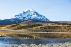 The Sajama National Park in Ranger of Bolivia- Stock Photo