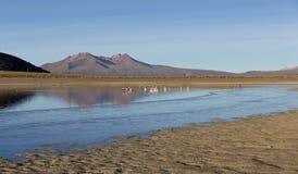 The Sajama National Park in Ranger of Bolivia- Royalty Free Stock Photo