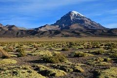 Sajama nationalpark, Bolivia Fotografering för Bildbyråer