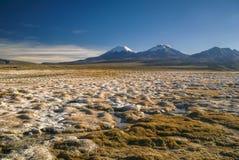 Sajama. Scenic view of bolivian volcanoes, highest peaks in Bolivia in Sajama national park Stock Photography