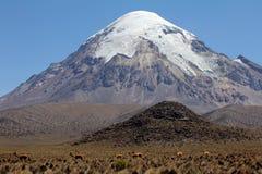 Sajama volcano. Volcan Sajama in the Andes of Bolivia Stock Photos