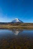 Sajama volcano and lake Huaynacota. Andean Bolivia Royalty Free Stock Photo