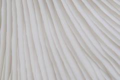 Sajor-caju蘑菇植物抽象自然背景宏指令  使用想法设计纹理自然样式的概念或墙纸 库存照片