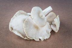 Sajor-caju mushroom on plywood Royalty Free Stock Image