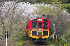 Sakano Romantic Train in Kyoto, Japan. KYOTO, JAPAN - APRIL 06 : Sakano Romantic Train, a sightseeing retro train that runs along mountain pass through sakura Royalty Free Stock Image