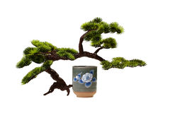 Sake and Bonsai Royalty Free Stock Photography