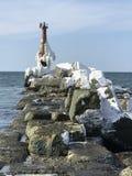 sakhalin fotografia stock