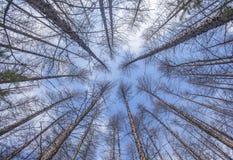 Sakhalin berg och vinter Royaltyfria Bilder