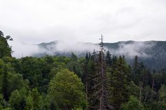 Sakhalin fogy mountains. With pine forest royalty free stock photography