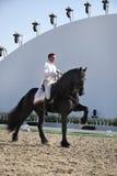 Sakhir, Bahrain 26. November: Lipizzaner Stallionserscheinen lizenzfreies stockbild