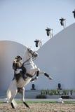 Sakhir, Bahrain il 26 novembre: Esposizione degli Stallions di Lipizzaner Fotografia Stock