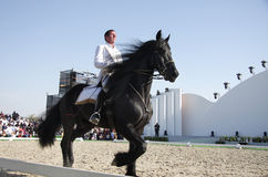 Sakhir, Bahrain il 26 novembre: Esposizione degli Stallions di Lipizzaner Fotografie Stock Libere da Diritti