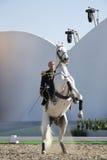 Sakhir, Bahrain le 26 novembre : Exposition d'étalons de Lipizzaner Image libre de droits