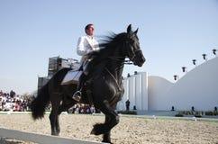 Sakhir, Barém novembro 26: Mostra dos garanhões de Lipizzaner Fotos de Stock Royalty Free