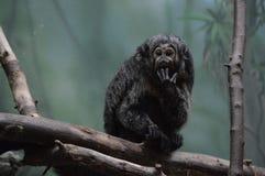 Saki-Affe auf einer Niederlassung Stockbilder