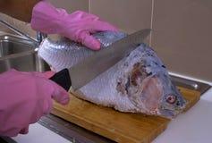 Sakkunnig kock Cutting och rengörande stor fisk i en rengöring och en hygien royaltyfri foto