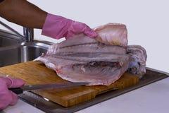 Sakkunnig kock Cutting och rengörande stor fisk i en rengöring och en hygien arkivbild