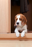 Saknad hund Arkivbild