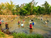 SAKON NAKHON THAILAND - MARS 3, 2017: fiska i dammet i nedgångsäsong arkivfoton