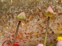 Sakral spirande lotusblomma på Buddhaskulptur med bladguldbakgrund Royaltyfria Foton
