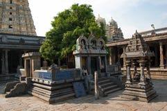 Sakral trädmango som är hängiven till unionen av Siva och Parvati Den Ekambareswarar templet är en hinduisk tempel Kachi gamla Ek Royaltyfri Bild