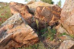 Sakrala stenar i området av byn av Krasnogorye i Ryssland royaltyfri foto