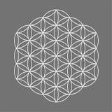 Sakralt geometrisymbol, blomma av liv för alkemi, andlighet, religion, filosofi, astrologiemblem eller etikett Vit symbolslogo Royaltyfria Foton