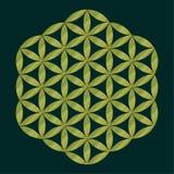 Sakralt geometrisymbol, guld- blomma av liv för alkemi, andlighet, religion, filosofi, astrologiemblem eller etikett Guld- ico Royaltyfri Bild