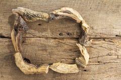 Sakralt trä, Burseragraveolens royaltyfri bild