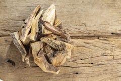 Sakralt trä, Burseragraveolens arkivfoto