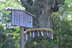 Sakralt träd i den Atsuta relikskrin Nagoya Japan arkivbild