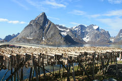 Sakrisoy's mountains  and stockfish Royalty Free Stock Photos