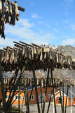 Sakrisoy 's rorbu, mount and stockfish Stock Image