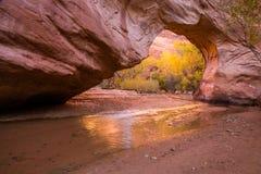 Sakta grund liten vik till och med den naturliga bron i den Escalante tusen dollar Sta Arkivfoton