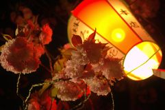 Sakura à la nuit et à la lanterne 2 photographie stock libre de droits