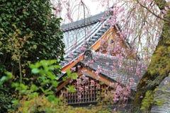 Sakura świątynia w Japonia i drzewo Obraz Royalty Free